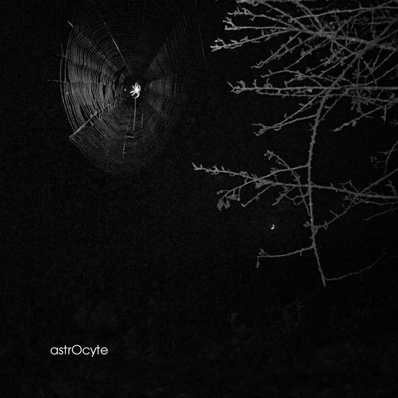 reflexion-graphique-astrocyte-spidersweb